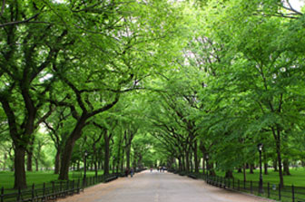 Beautiful Central Park