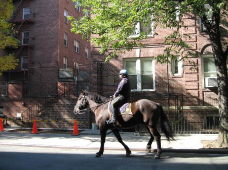 horsecop