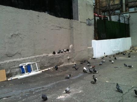 PigeonGhetto